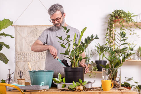 Man using trowel while potting Zamioculcas Zamiifolia plant in flower pot while standing at home - RTBF01534