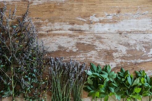 Varieties of medicinal herbs against wall - AKLF00024