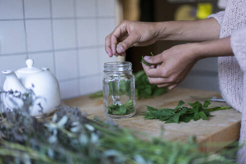 Woman's hands putting herbal leaves in jar while to prepare tea at home - AKLF00027