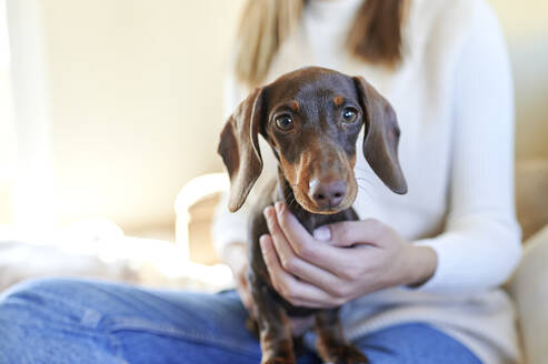 Dachshund dog held by woman at home - KIJF03590