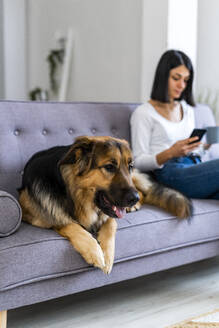 German shepherd sitting on sofa with woman using mobile phone - GIOF11317