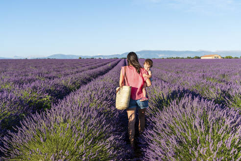 Mother carrying baby daughter in vast lavender field during summer - GEMF04693