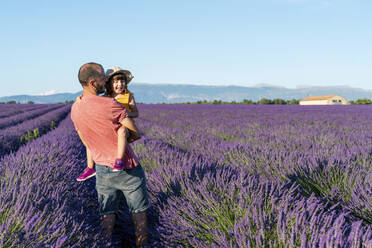 Father carrying baby daughter in vast lavender field during summer - GEMF04699