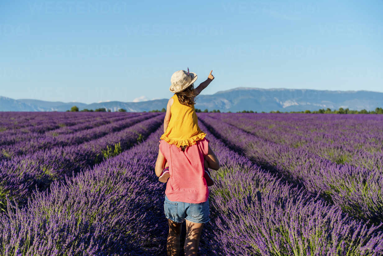 Little girl on shoulders of happy mother in a lavender field at afternoon in Valensole, Provence, France - GEMF04708 - Gemma Ferrando/Westend61