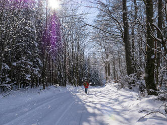 Germany, Black Forest, Freiamt, Person hiking on Schillinger Berg in winter - LAF02689