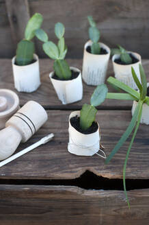 Plant potted in paper flower pot on wooden box - GISF00762