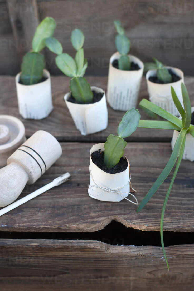 Plant potted in paper flower pot on wooden box - GISF00762 - Gianna Schade/Westend61