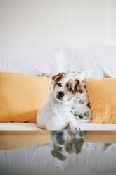 Dog staring while sitting on sofa at home - EBBF02521