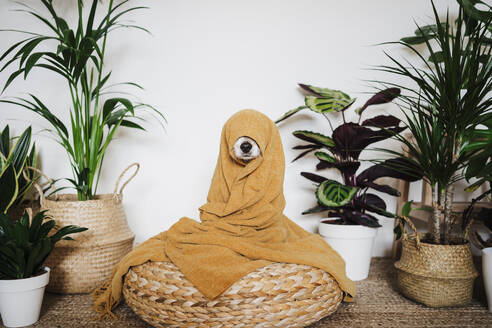 Playful dog wrapped in blanket sitting on ottoman stool by houseplant at home - EBBF02530
