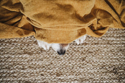 Dog in blanket resting while lying on carpet at home - EBBF02533