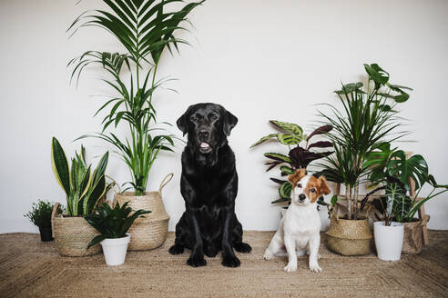 Dogs sitting together on carpet by plant at home - EBBF02536