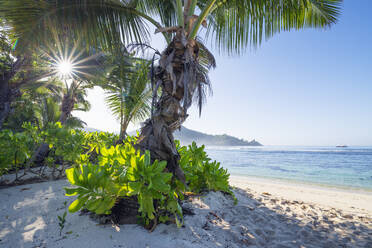 A famous tropical beach with Palm Trees at Baie Lazare. Baie Lazare, Mahe, Mahe Island, Seychelles, Indian Ocean, Africa. - RUEF03215