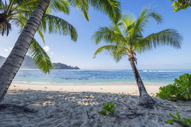 A famous tropical beach with Palm Trees at Baie Lazare. Baie Lazare, Mahe, Mahe Island, Seychelles, Indian Ocean, Africa. - RUEF03218
