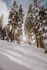 Skitour mit viel Neuschnee. Österreich, Kärnten, Gerlitzen (Berg), Villach - DAWF01780