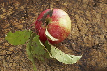 Ripe apple lying on wooden surface - SABF00065
